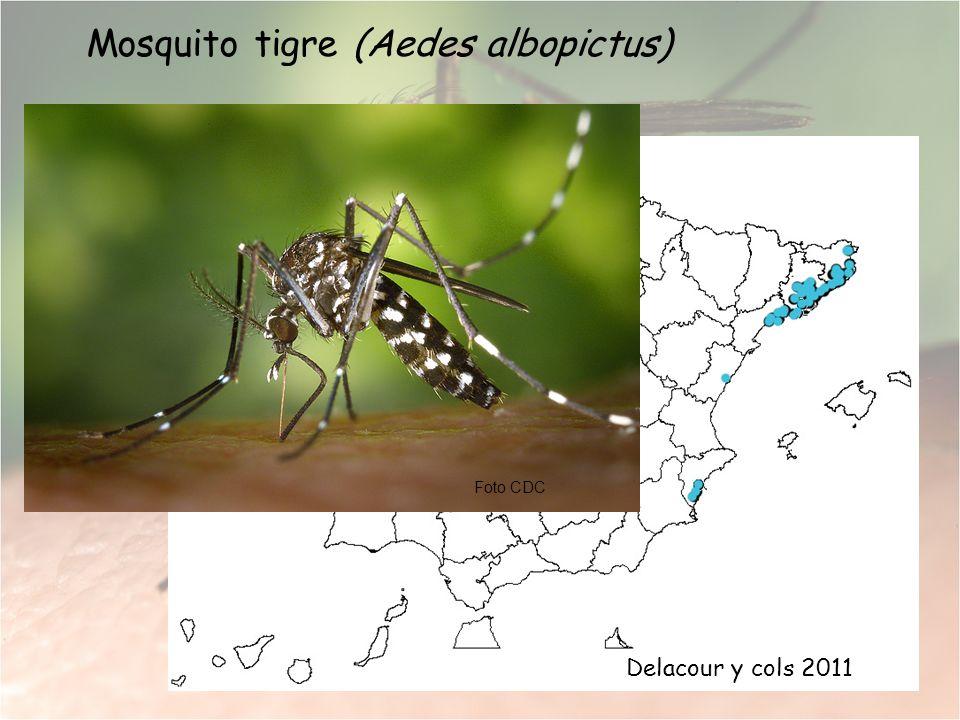 Mosquito tigre (Aedes albopictus) Foto CDC Delacour y cols 2011