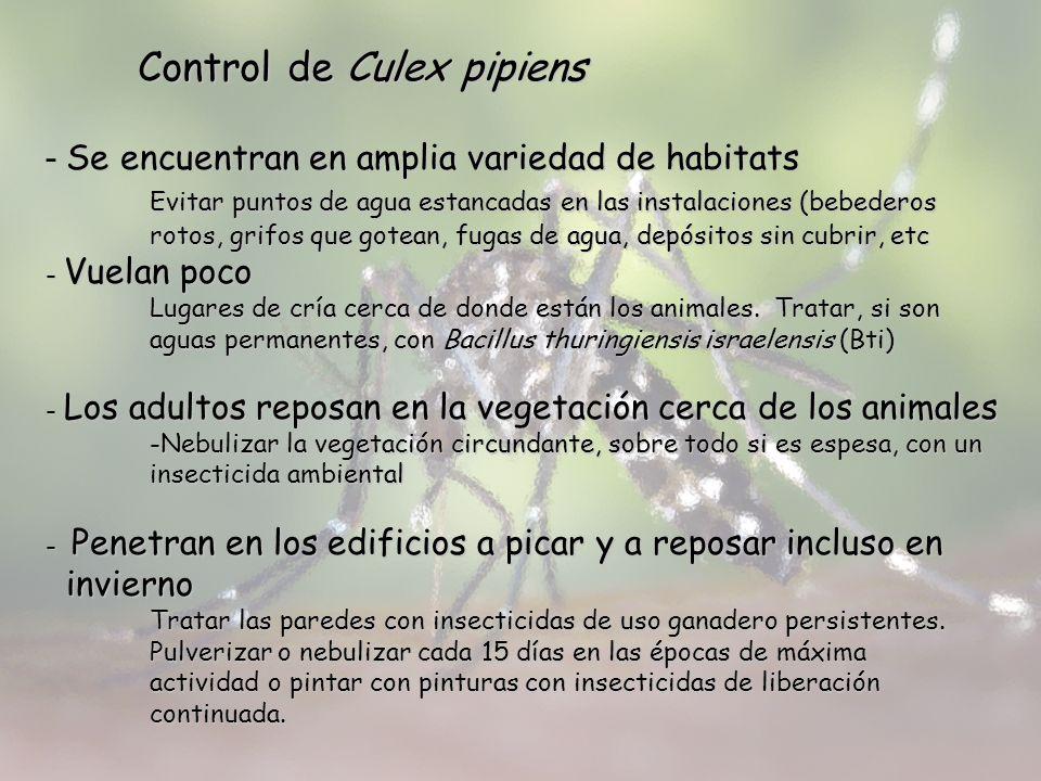 Control de Culex pipiens Se encuentran en amplia variedad de habitats - Se encuentran en amplia variedad de habitats Evitar puntos de agua estancadas