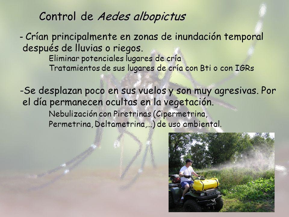 Control de Aedes albopictus - Crían principalmente en zonas de inundación temporal después de lluvias o riegos. Eliminar potenciales lugares de cría T