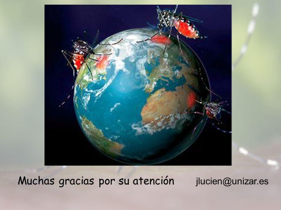 Muchas gracias por su atención jlucien@unizar.es