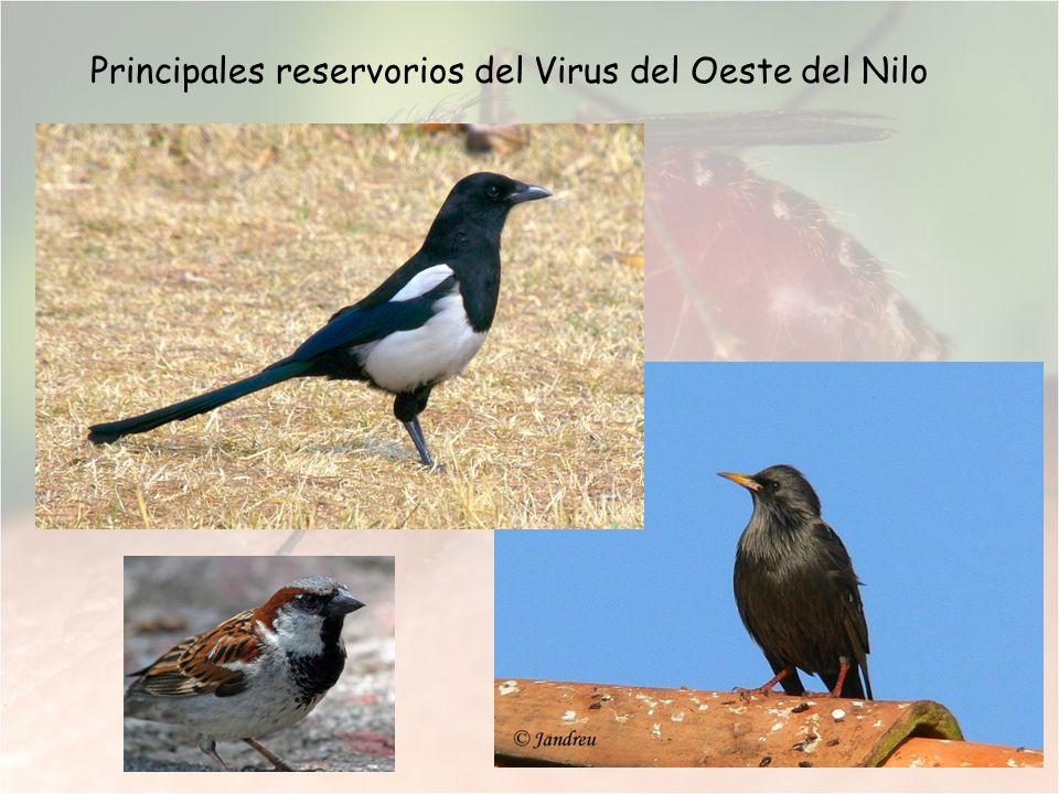 Principales reservorios del Virus del Oeste del Nilo
