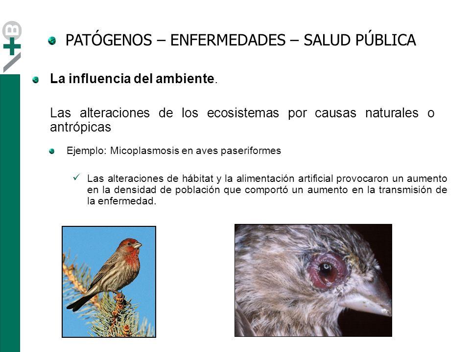 http://www.birds.cornell.edu/hofi/spreaddisease.html PATÓGENOS – ENFERMEDADES – SALUD PÚBLICA