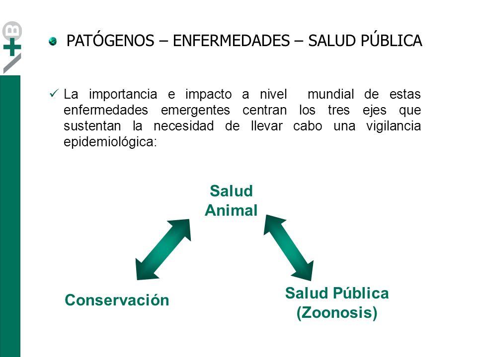 Salud Animal Salud Pública (Zoonosis) Conservación Ejemplo: WNV reservorio aves afecta a humanos dificil erradicación riesgos sobre la conservación de especies