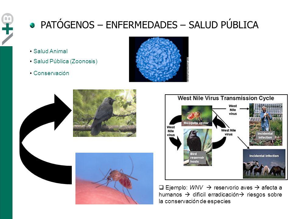 PATÓGENOS – ENFERMEDADES – SALUD PÚBLICA Sovada et al.