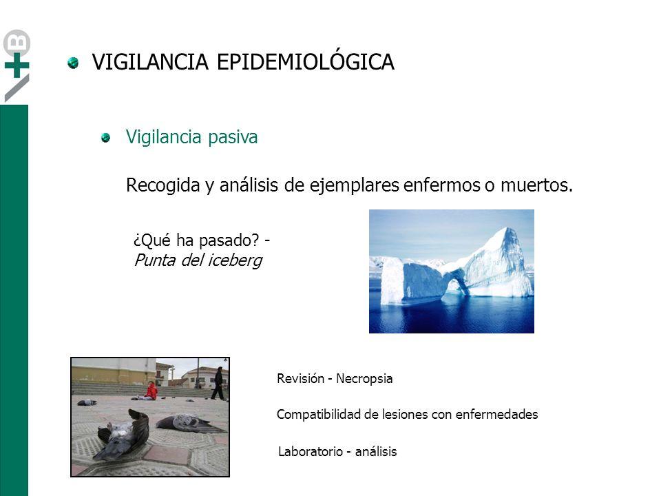 VIGILANCIA EPIDEMIOLÓGICA Este tipo de vigilancia concentra el muestreo en diferentes zonas en función del riesgo.
