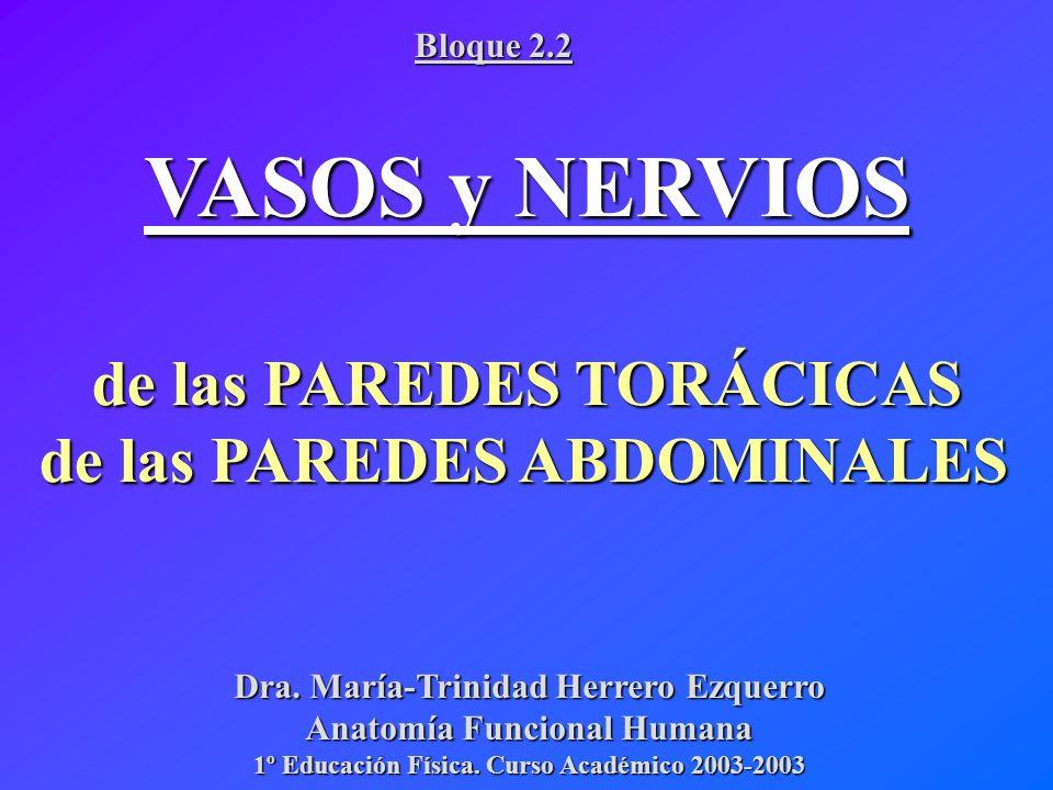 VASCULARIZACIÓN PAREDES del TRONCO SISTEMA VENOSO SISTEMA ARTERIAL