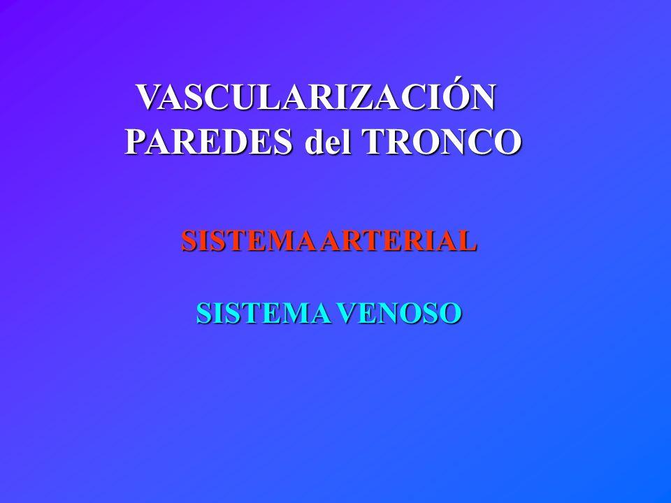 INERVACIÓN CUTÁNEA Distribución Metamérica Dorsal Ventral