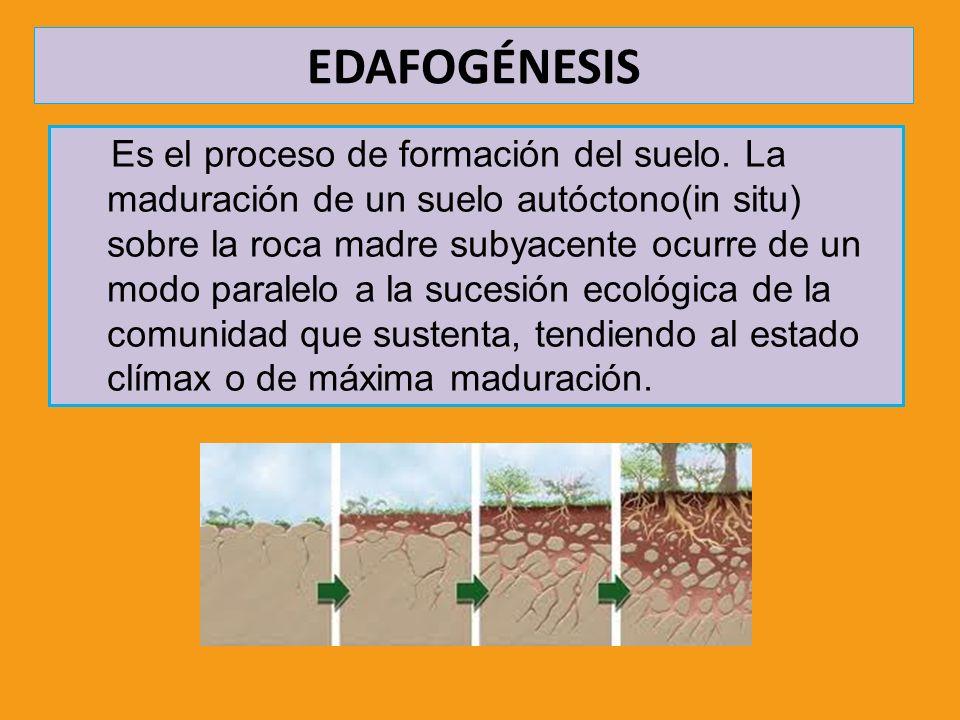 EDAFOGÉNESIS Es el proceso de formación del suelo. La maduración de un suelo autóctono(in situ) sobre la roca madre subyacente ocurre de un modo paral