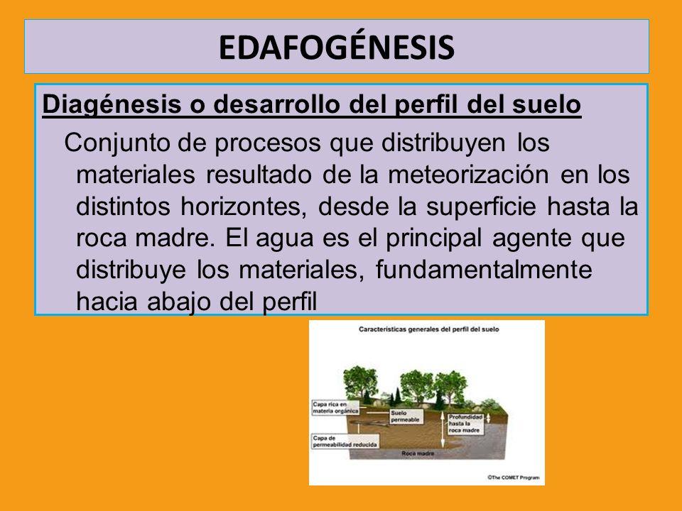 Diagénesis o desarrollo del perfil del suelo Conjunto de procesos que distribuyen los materiales resultado de la meteorización en los distintos horizo
