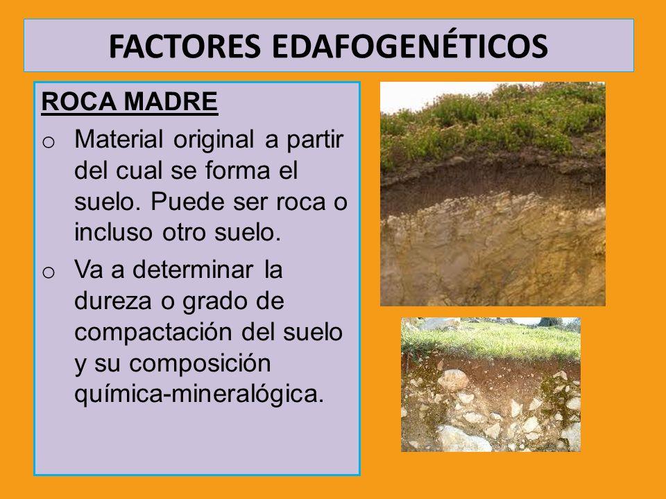 FACTORES EDAFOGENÉTICOS ROCA MADRE o Material original a partir del cual se forma el suelo. Puede ser roca o incluso otro suelo. o Va a determinar la