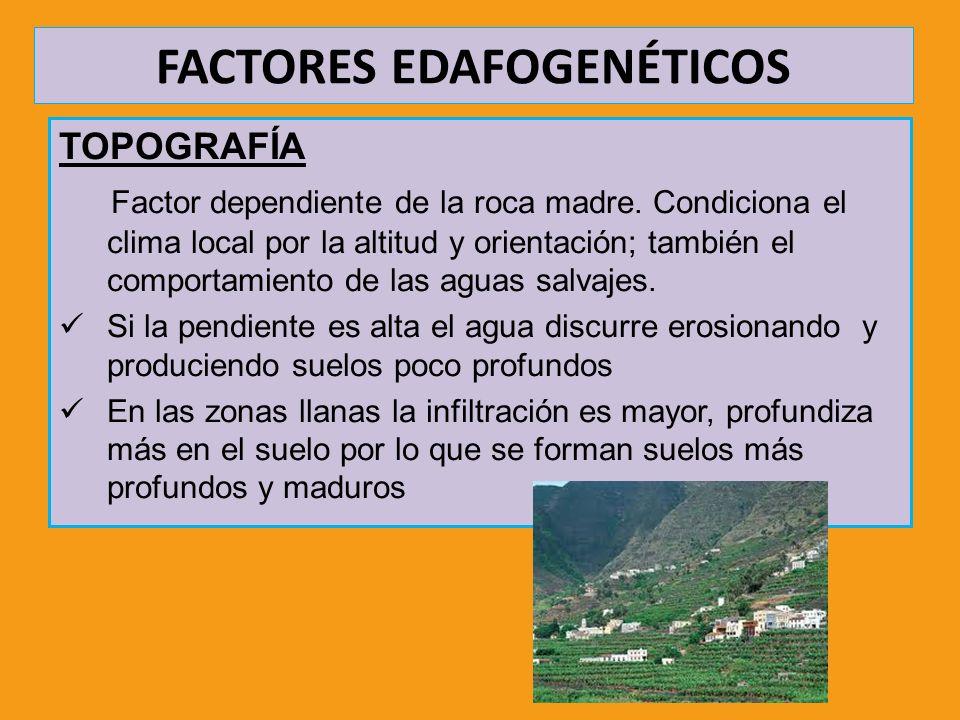 FACTORES EDAFOGENÉTICOS TOPOGRAFÍA Factor dependiente de la roca madre. Condiciona el clima local por la altitud y orientación; también el comportamie