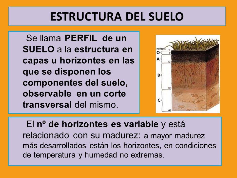 ESTRUCTURA DEL SUELO Existen tres tipos de horizontes: Horizontes A, orgánicos o de lixiviado Horizontes B, minerales o de acumulación Horizontes C o roca madre