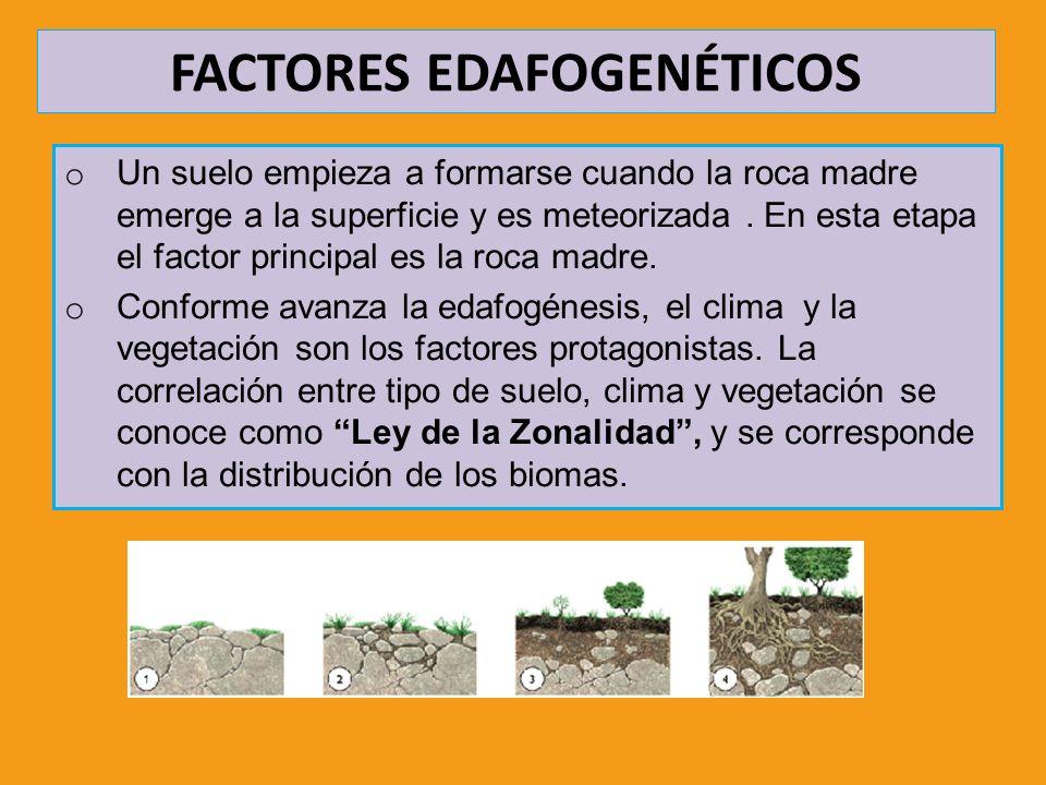 FACTORES EDAFOGENÉTICOS o Un suelo empieza a formarse cuando la roca madre emerge a la superficie y es meteorizada. En esta etapa el factor principal