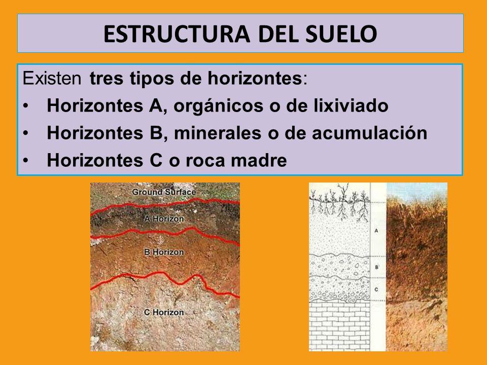 ESTRUCTURA DEL SUELO Existen tres tipos de horizontes: Horizontes A, orgánicos o de lixiviado Horizontes B, minerales o de acumulación Horizontes C o