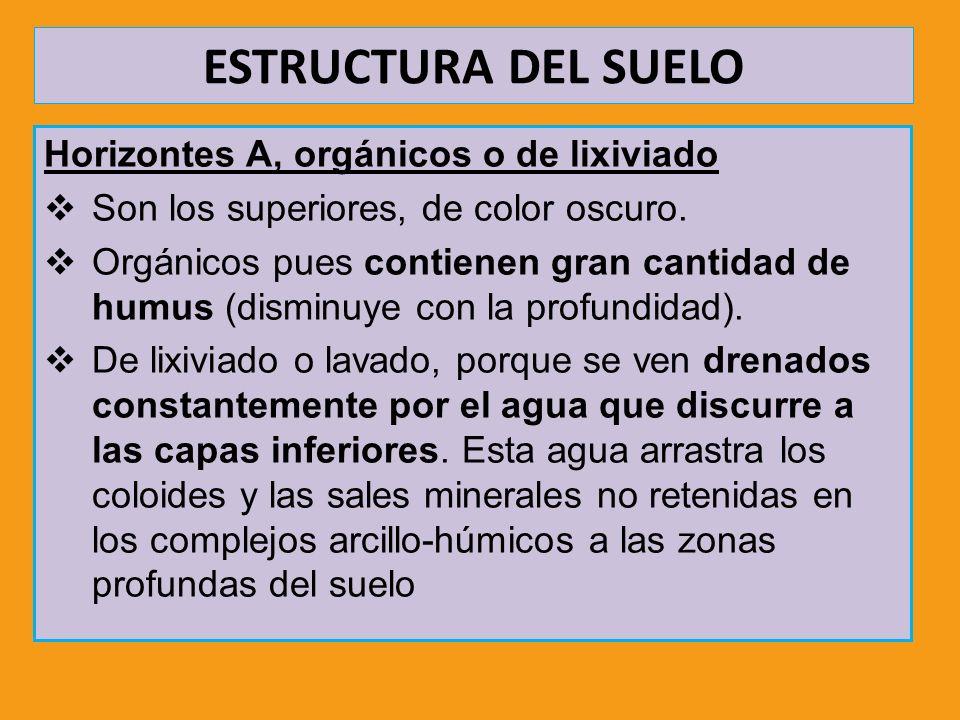 ESTRUCTURA DEL SUELO Horizontes A, orgánicos o de lixiviado Son los superiores, de color oscuro. Orgánicos pues contienen gran cantidad de humus (dism