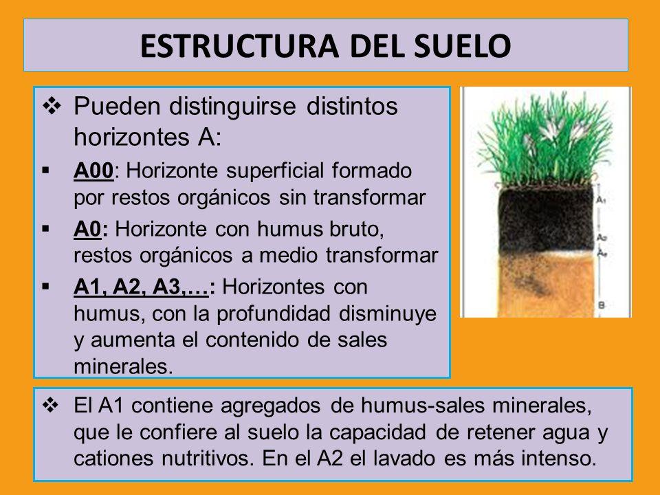 ESTRUCTURA DEL SUELO Pueden distinguirse distintos horizontes A: A00: Horizonte superficial formado por restos orgánicos sin transformar A0: Horizonte