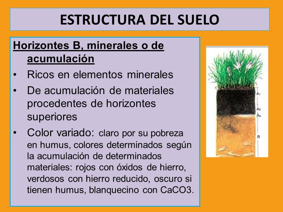 Horizontes B, minerales o de acumulación Ricos en elementos minerales De acumulación de materiales procedentes de horizontes superiores Color variado: