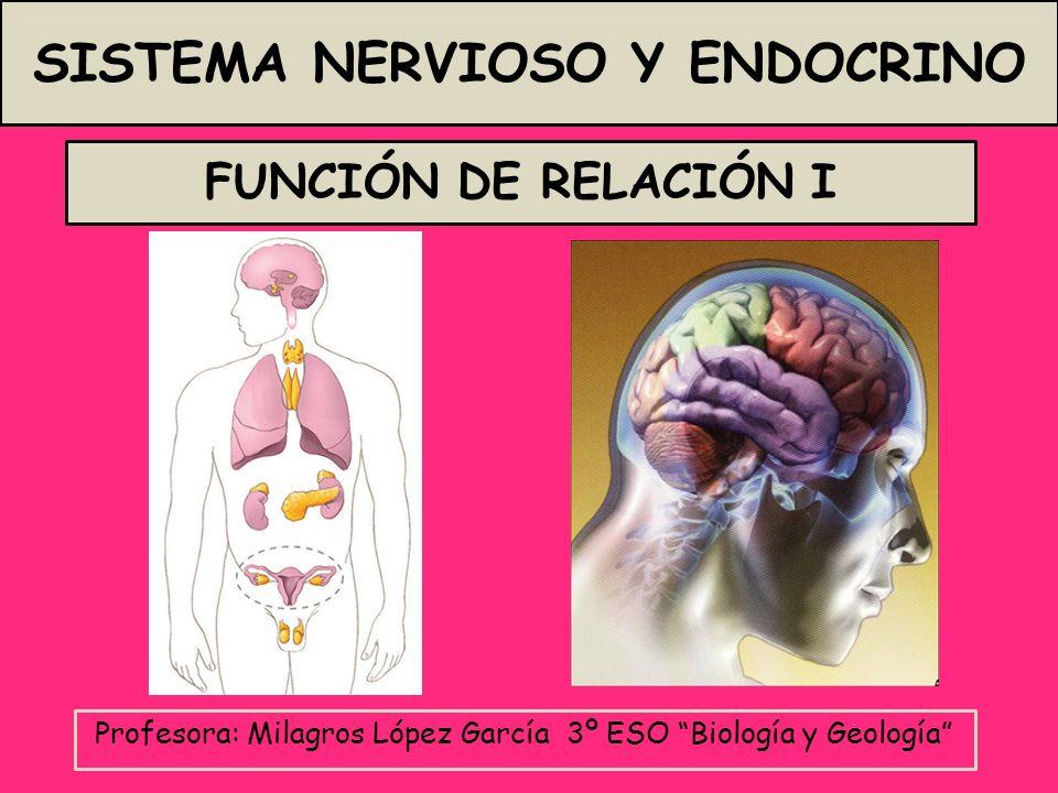 FUNCIÓN DE RELACIÓN I Profesora: Milagros López García 3º ESO Biología y Geología SISTEMA NERVIOSO Y ENDOCRINO
