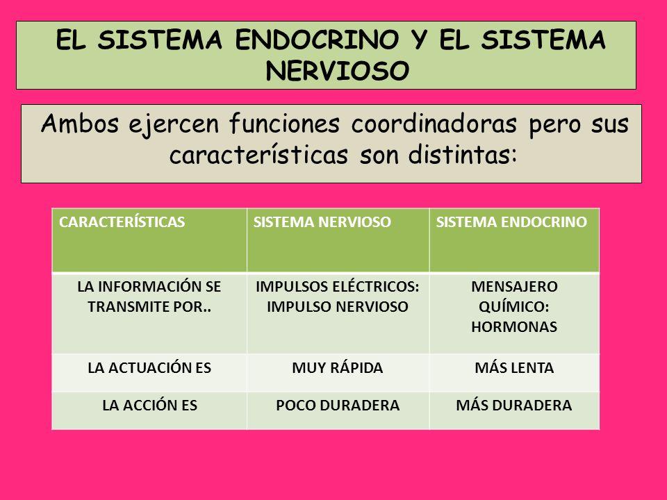 Ambos ejercen funciones coordinadoras pero sus características son distintas: EL SISTEMA ENDOCRINO Y EL SISTEMA NERVIOSO CARACTERÍSTICASSISTEMA NERVIO