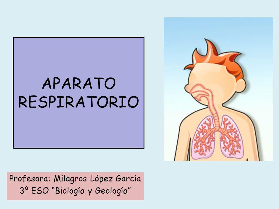 PULMONES Recuerda Es un órgano par de aspecto esponjoso constituido por los bronquios, bronquiolos, alvéolos pulmonares y una extensa red de capilares sanguíneos.