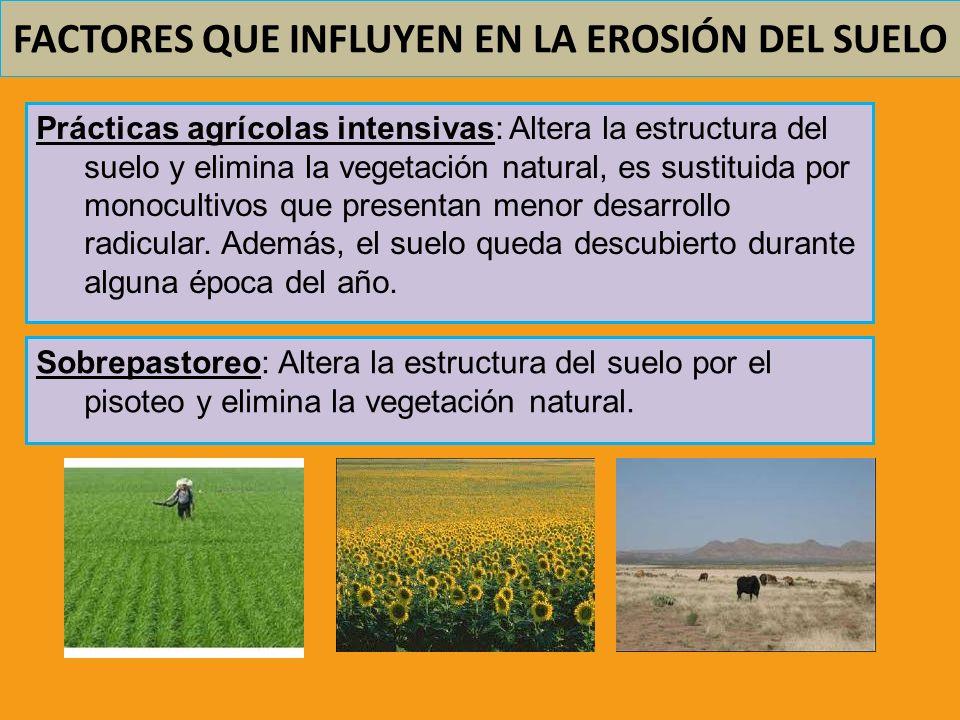 FACTORES QUE INFLUYEN EN LA EROSIÓN DEL SUELO Prácticas agrícolas intensivas: Altera la estructura del suelo y elimina la vegetación natural, es susti