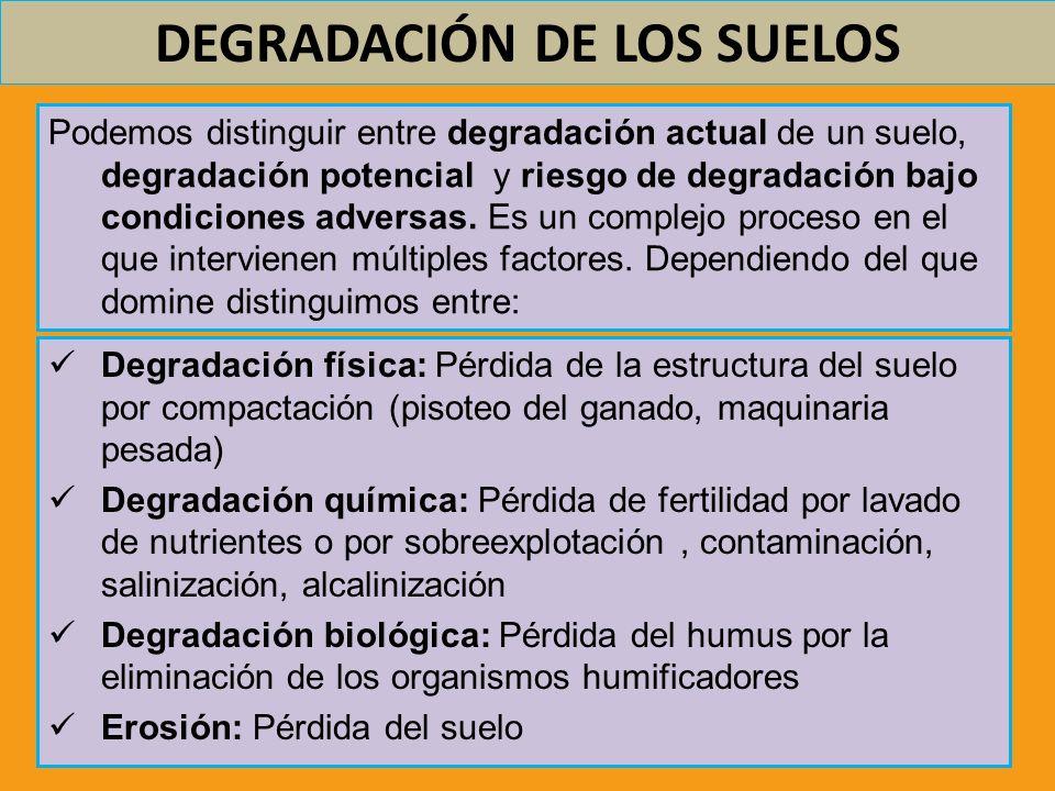 DEGRADACIÓN DE LOS SUELOS Podemos distinguir entre degradación actual de un suelo, degradación potencial y riesgo de degradación bajo condiciones adve