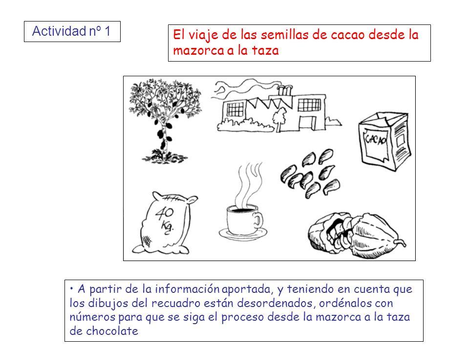 El viaje de las semillas de cacao desde la mazorca a la taza A partir de la información aportada, y teniendo en cuenta que los dibujos del recuadro es