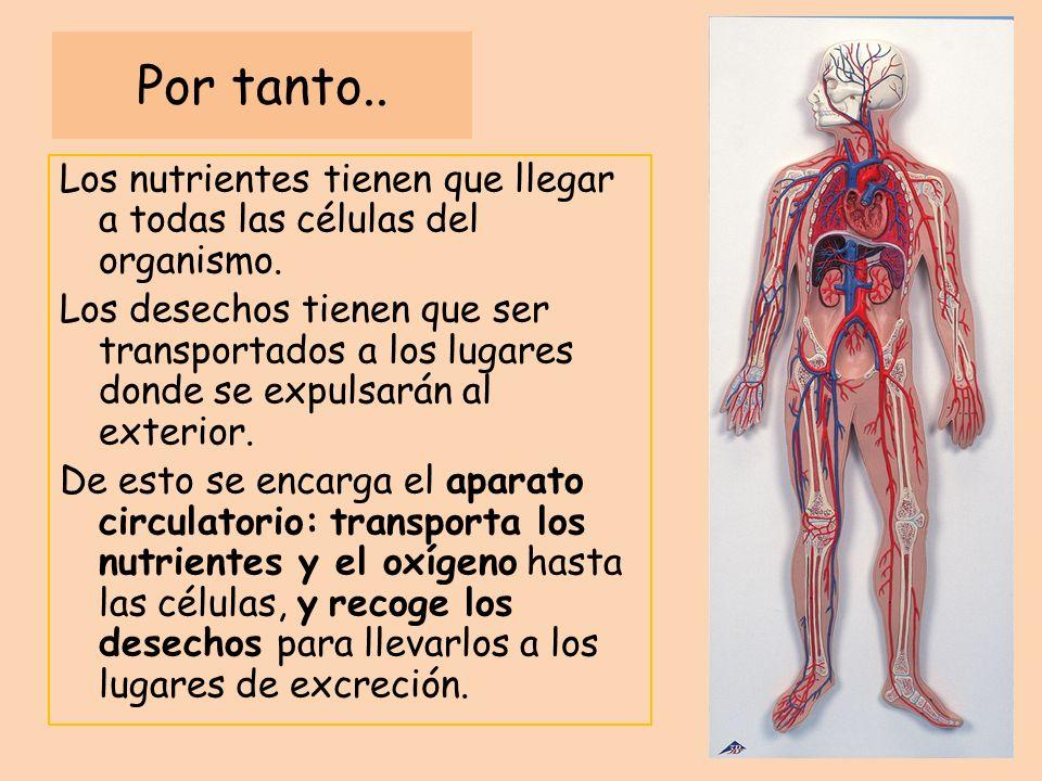 Por tanto.. Los nutrientes tienen que llegar a todas las células del organismo. Los desechos tienen que ser transportados a los lugares donde se expul