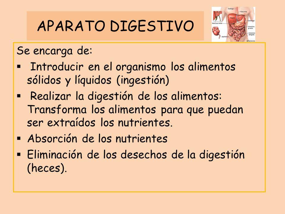 APARATO DIGESTIVO Se encarga de: Introducir en el organismo los alimentos sólidos y líquidos (ingestión) Realizar la digestión de los alimentos: Trans