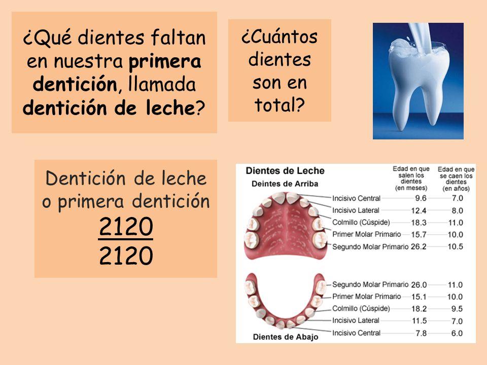 ¿Qué dientes faltan en nuestra primera dentición, llamada dentición de leche? Dentición de leche o primera dentición 2120 ¿Cuántos dientes son en tota