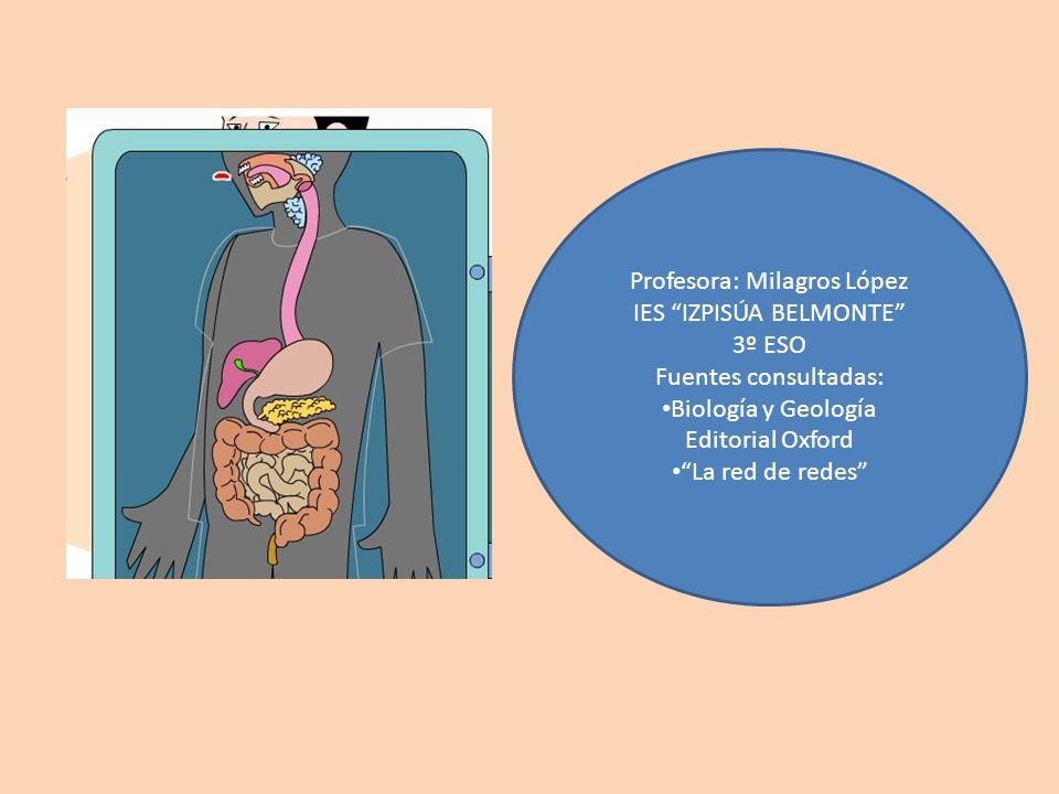 Profesora: Milagros López IES IZPISÚA BELMONTE 3º ESO Fuentes consultadas: Biología y Geología Editorial Oxford La red de redes