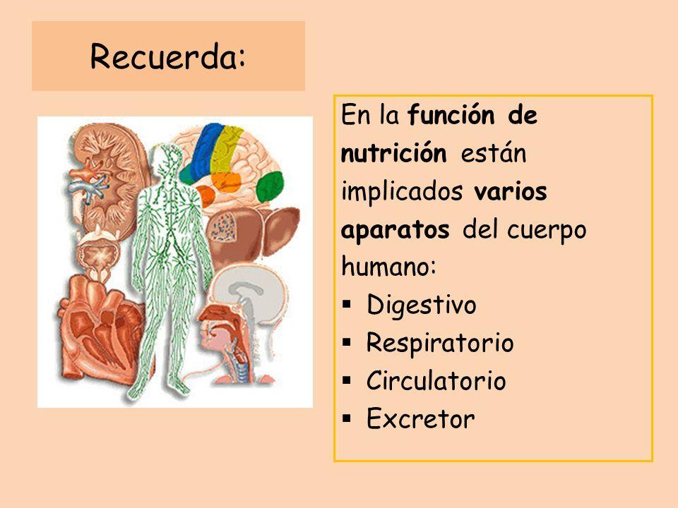 Recuerda: En la función de nutrición están implicados varios aparatos del cuerpo humano: Digestivo Respiratorio Circulatorio Excretor