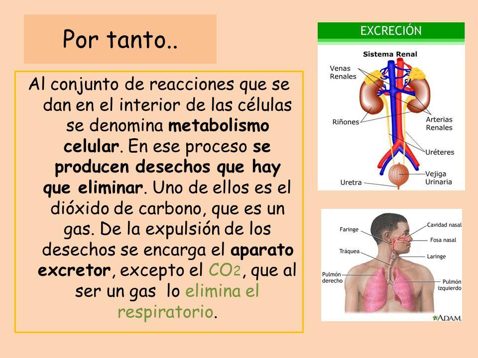 Por tanto.. Al conjunto de reacciones que se dan en el interior de las células se denomina metabolismo celular. En ese proceso se producen desechos qu