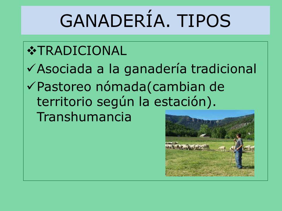 GANADERÍA. TIPOS TRADICIONAL Asociada a la ganadería tradicional Pastoreo nómada(cambian de territorio según la estación). Transhumancia