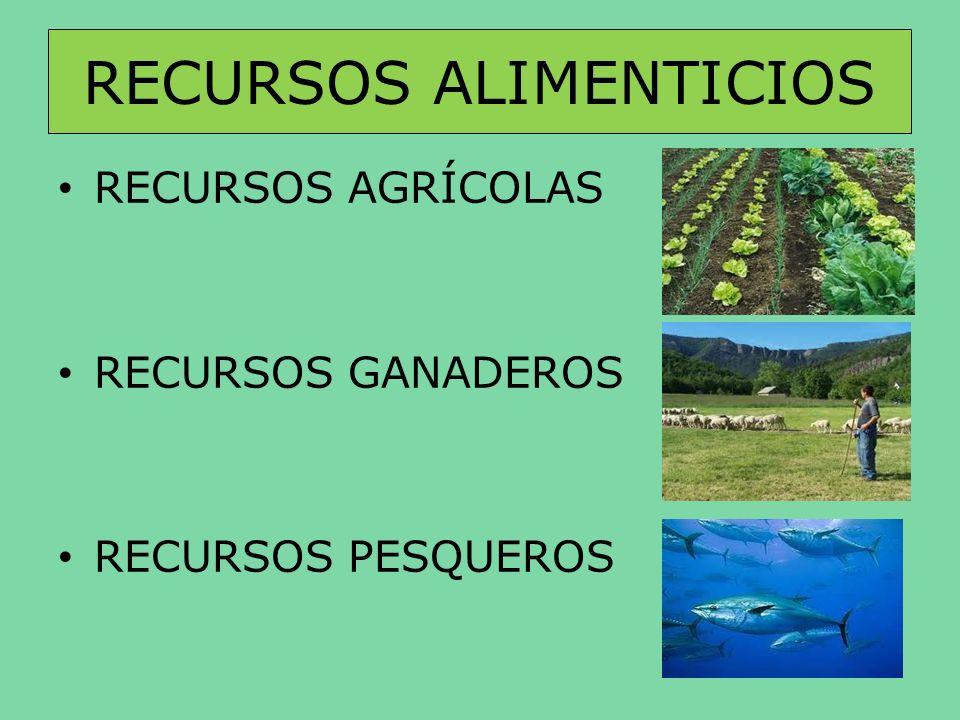 AGRICULTURA Conjunto de actividades humanas que transforman el medio natural para favorecer el crecimiento de las plantas necesarias para el consumo humano.