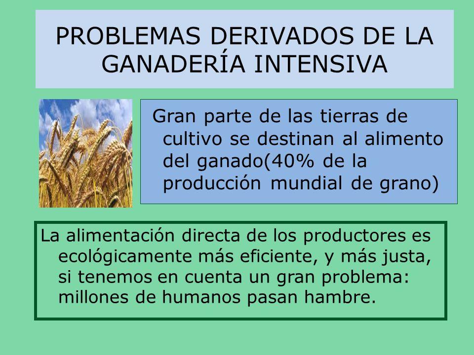 PROBLEMAS DERIVADOS DE LA GANADERÍA INTENSIVA Gran parte de las tierras de cultivo se destinan al alimento del ganado(40% de la producción mundial de