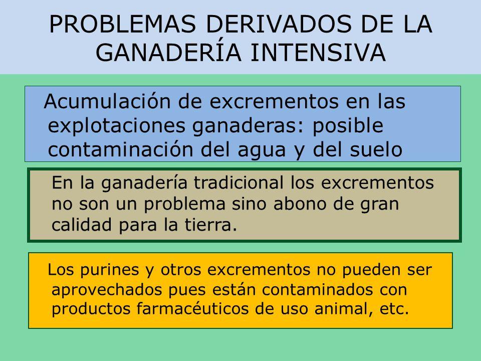 PROBLEMAS DERIVADOS DE LA GANADERÍA INTENSIVA En la ganadería tradicional los excrementos no son un problema sino abono de gran calidad para la tierra