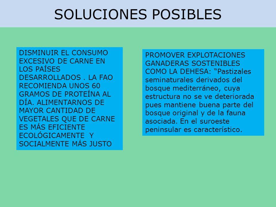 SOLUCIONES POSIBLES DISMINUIR EL CONSUMO EXCESIVO DE CARNE EN LOS PAÍSES DESARROLLADOS. LA FAO RECOMIENDA UNOS 60 GRAMOS DE PROTEÍNA AL DÍA. ALIMENTAR