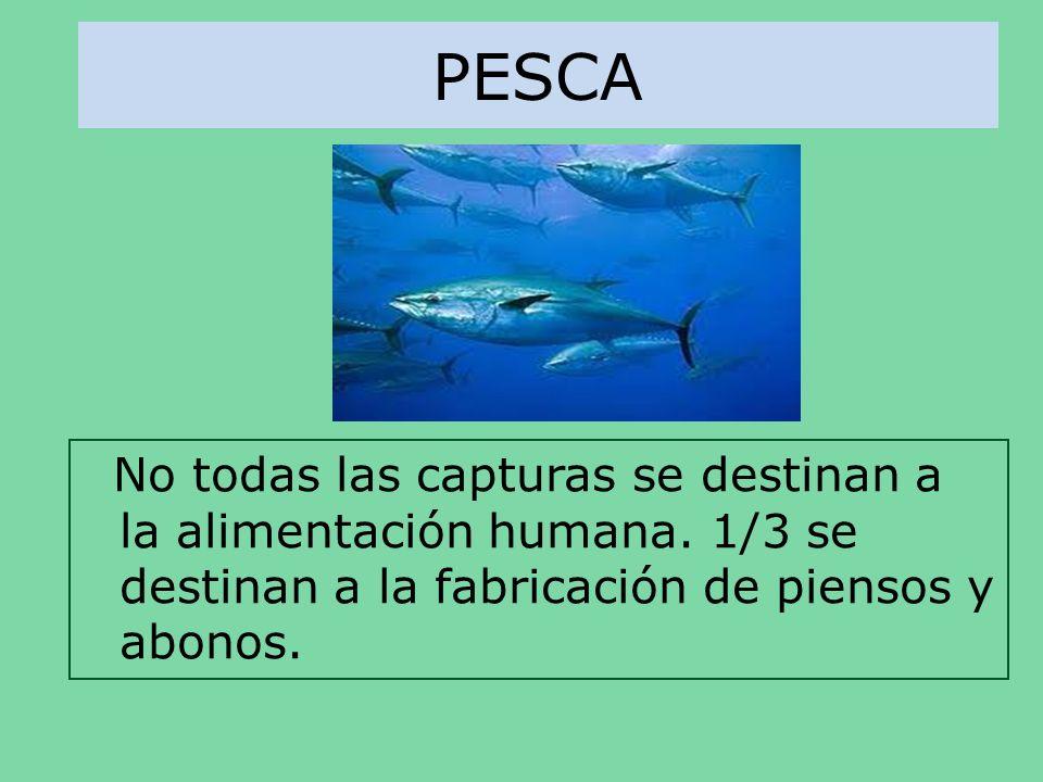 PESCA No todas las capturas se destinan a la alimentación humana. 1/3 se destinan a la fabricación de piensos y abonos.