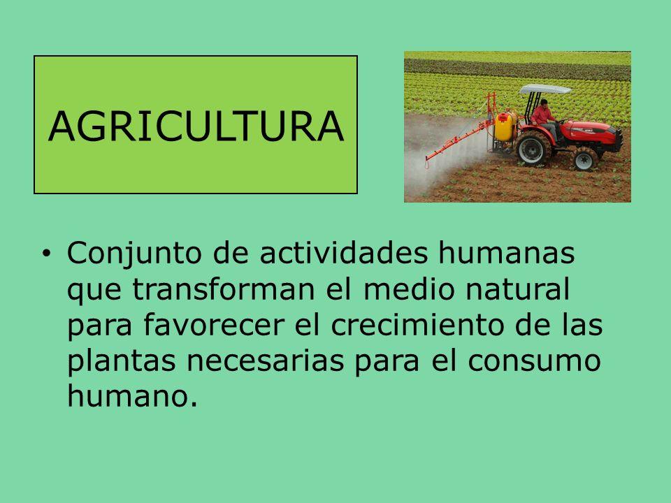 AGRICULTURA Conjunto de actividades humanas que transforman el medio natural para favorecer el crecimiento de las plantas necesarias para el consumo h