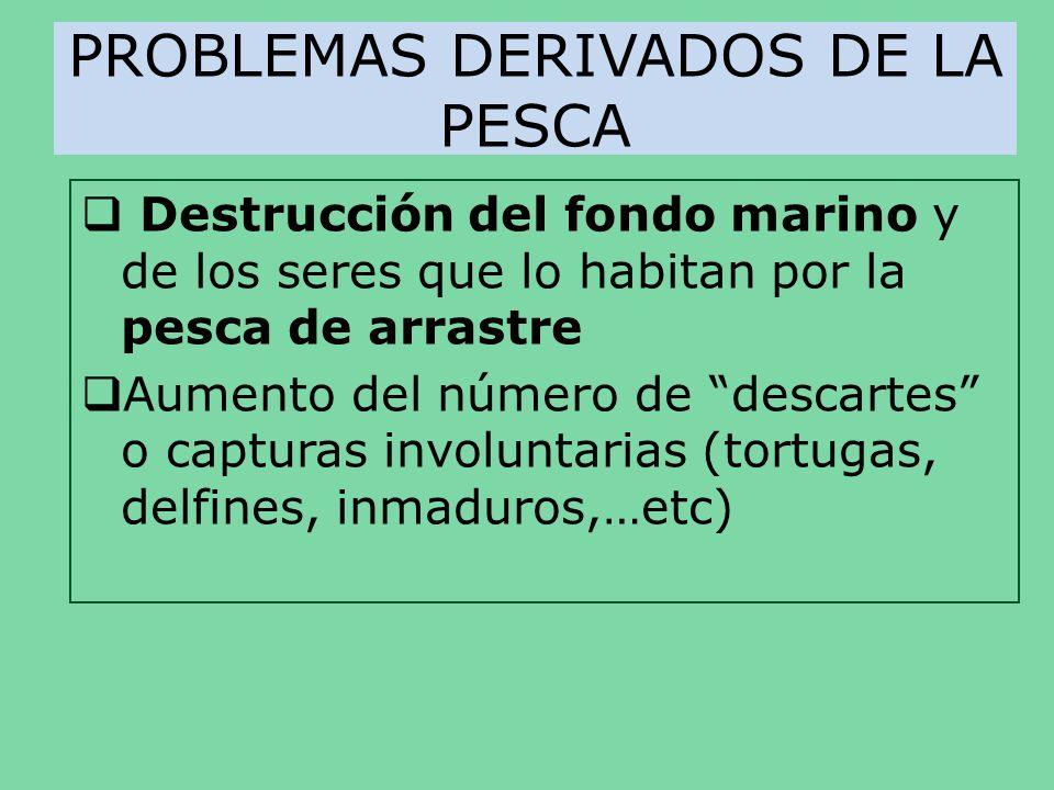 PROBLEMAS DERIVADOS DE LA PESCA Destrucción del fondo marino y de los seres que lo habitan por la pesca de arrastre Aumento del número de descartes o