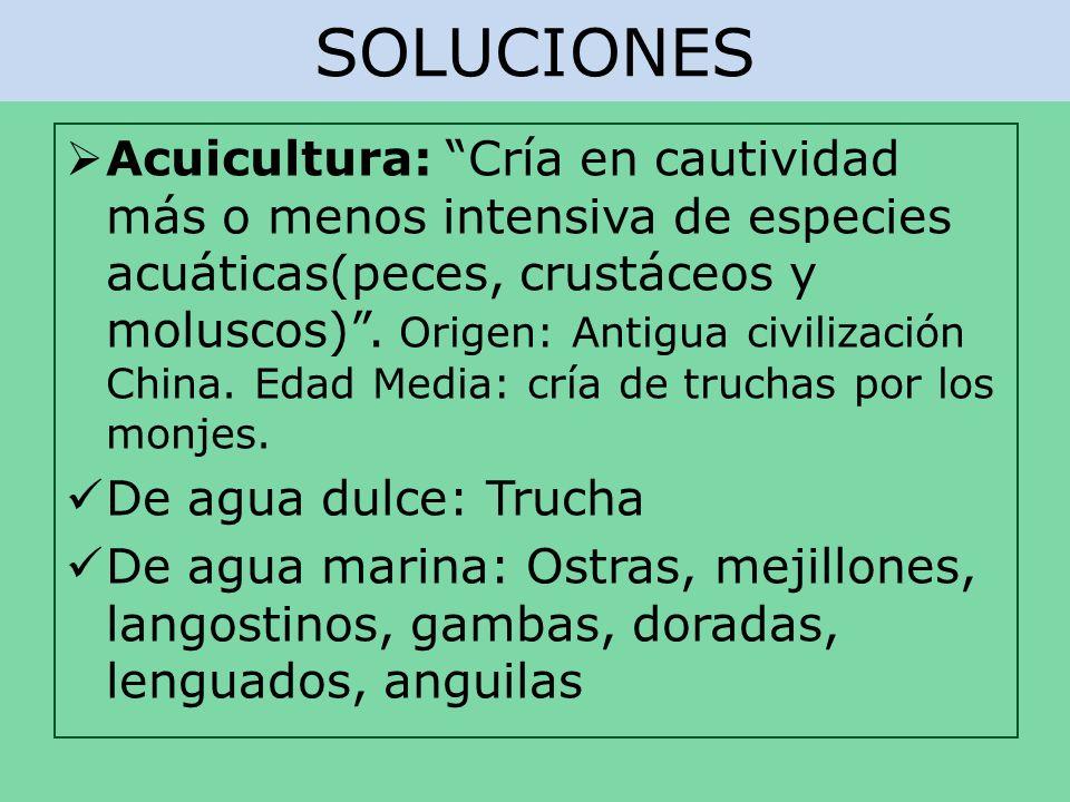 SOLUCIONES Acuicultura: Cría en cautividad más o menos intensiva de especies acuáticas(peces, crustáceos y moluscos). Origen: Antigua civilización Chi