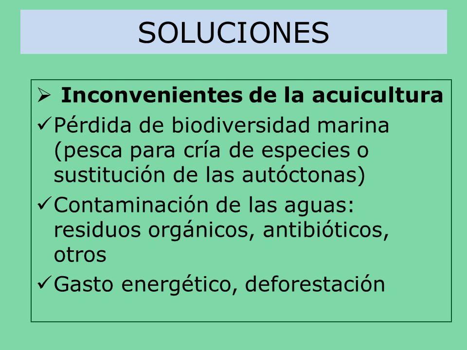 SOLUCIONES Inconvenientes de la acuicultura Pérdida de biodiversidad marina (pesca para cría de especies o sustitución de las autóctonas) Contaminació