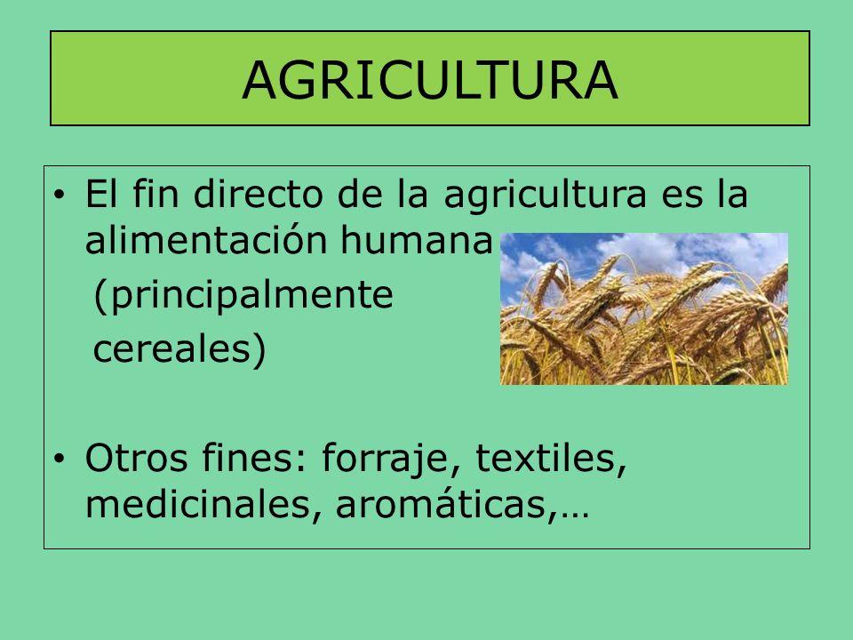 AGRICULTURA El fin directo de la agricultura es la alimentación humana (principalmente cereales) Otros fines: forraje, textiles, medicinales, aromátic