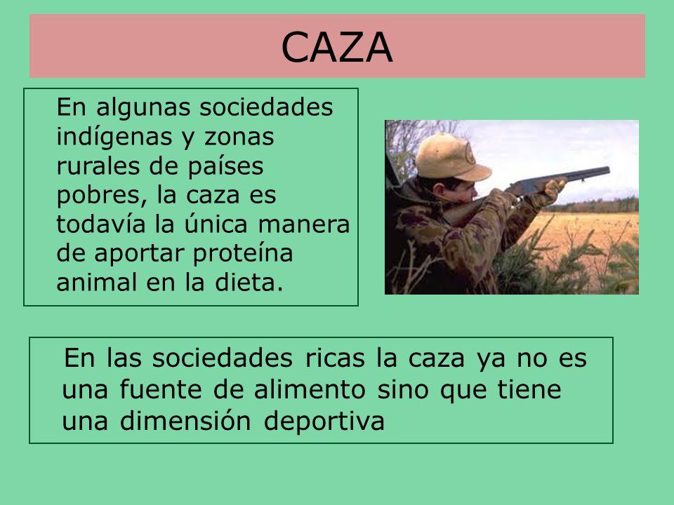 CAZA En algunas sociedades indígenas y zonas rurales de países pobres, la caza es todavía la única manera de aportar proteína animal en la dieta. En l