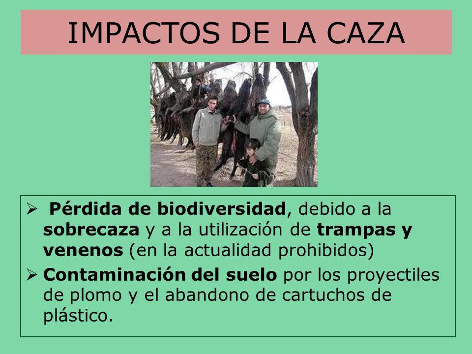 IMPACTOS DE LA CAZA Pérdida de biodiversidad, debido a la sobrecaza y a la utilización de trampas y venenos (en la actualidad prohibidos) Contaminació