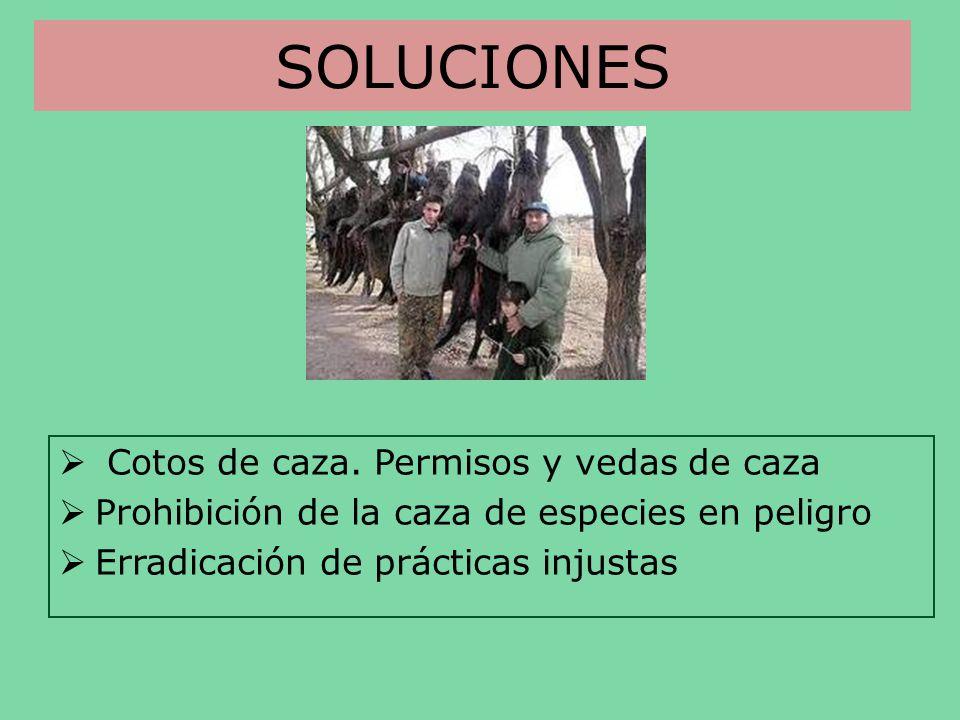 SOLUCIONES Cotos de caza. Permisos y vedas de caza Prohibición de la caza de especies en peligro Erradicación de prácticas injustas
