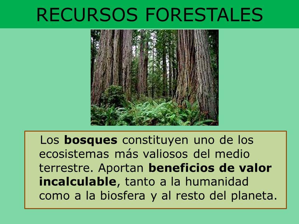 RECURSOS FORESTALES Los bosques constituyen uno de los ecosistemas más valiosos del medio terrestre. Aportan beneficios de valor incalculable, tanto a