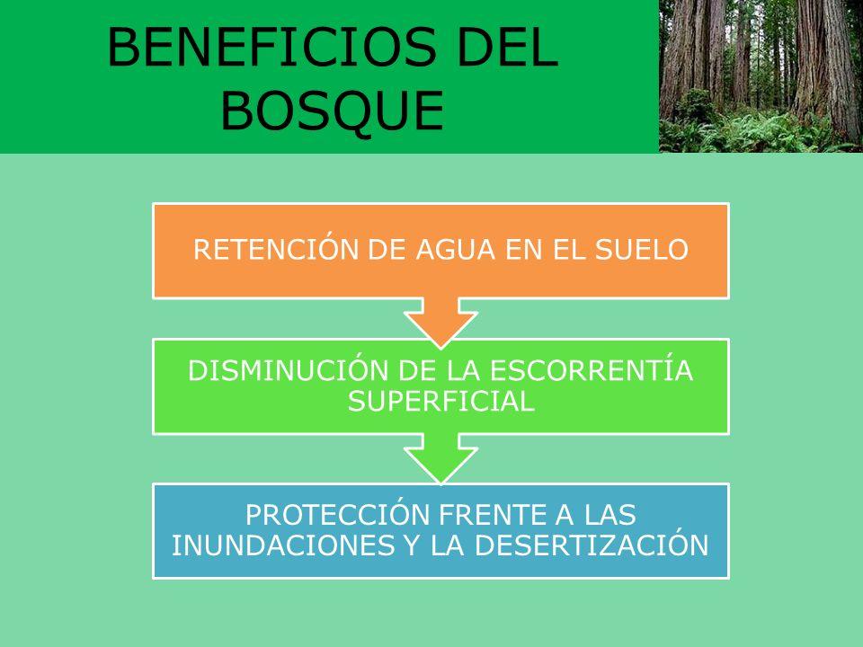 BENEFICIOS DEL BOSQUE PROTECCIÓN FRENTE A LAS INUNDACIONES Y LA DESERTIZACIÓN DISMINUCIÓN DE LA ESCORRENTÍA SUPERFICIAL RETENCIÓN DE AGUA EN EL SUELO