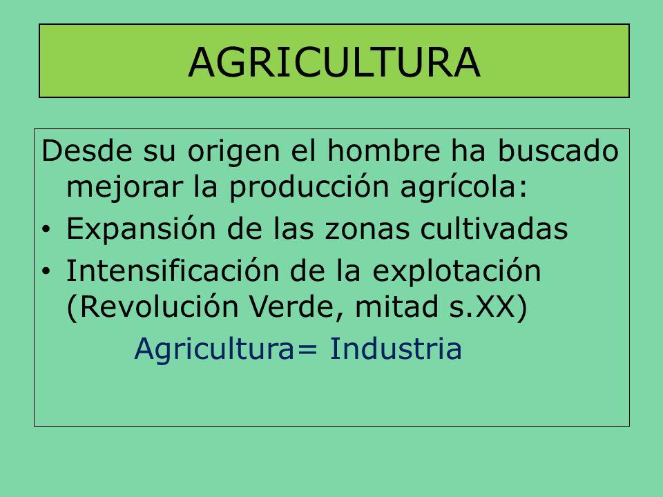AGRICULTURA Desde su origen el hombre ha buscado mejorar la producción agrícola: Expansión de las zonas cultivadas Intensificación de la explotación (